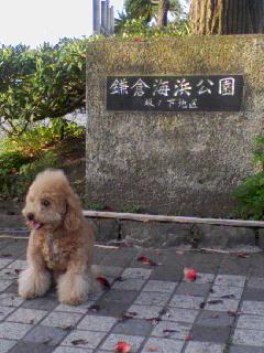 鎌倉海浜公園inさくら