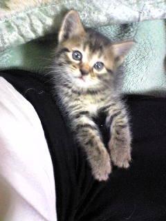 姉の猫ちゃん「チビ」