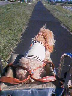 二子玉川へ自転車でおでかけ