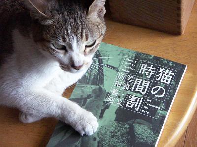 猫の時間割