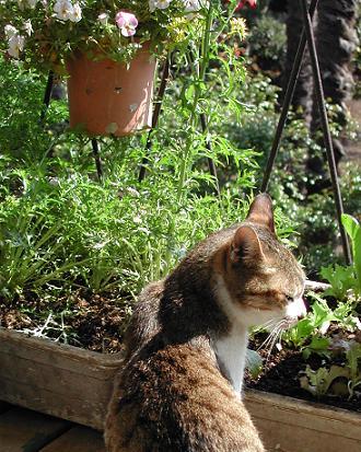 見返りヘディ猫