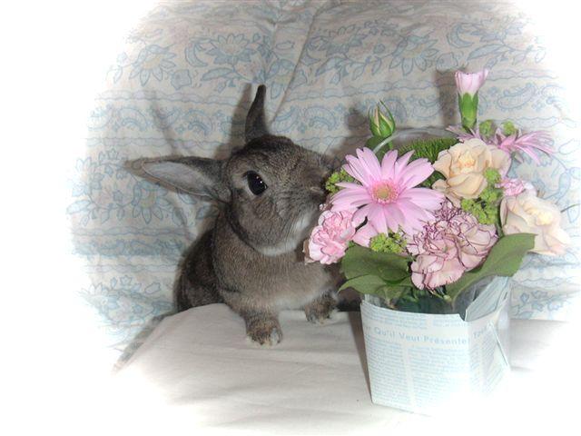 お花とぼく・