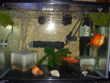 金魚水槽 12,28
