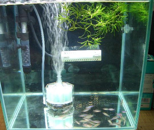 白点病治療の隔離水槽 5,5