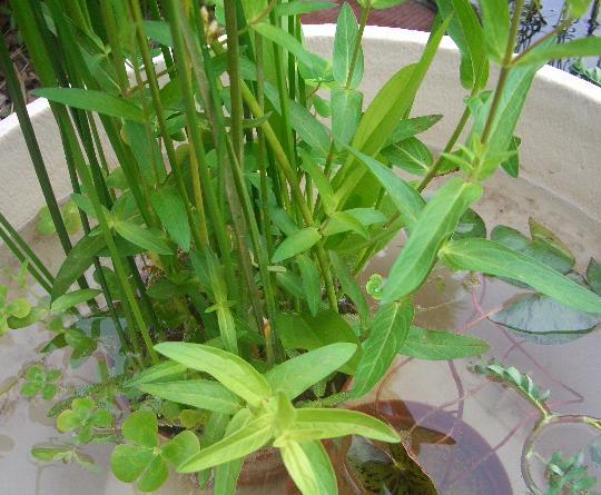 インスタントビオの植物 7,3