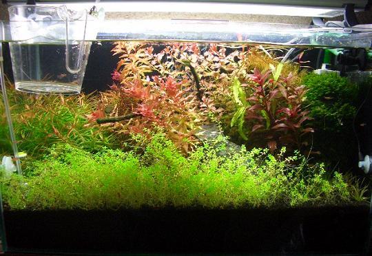 水草水槽 1,23