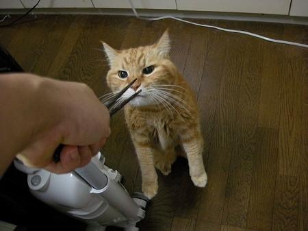お箸をクンクン