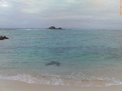 伊是名島のちょっとした海岸