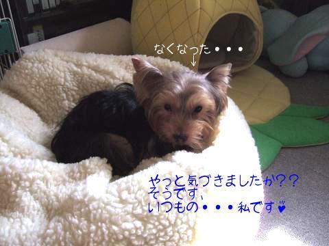 DSCF07232.jpg
