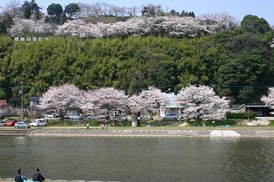 三刀屋の桜