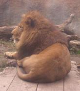 ライオンキング♪