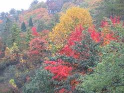 山形蔵王の紅葉模様