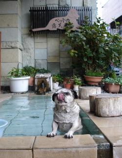 060730ワンコの温泉