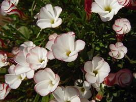080130花.jpg