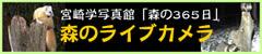 「宮崎学写真館 森の365日」