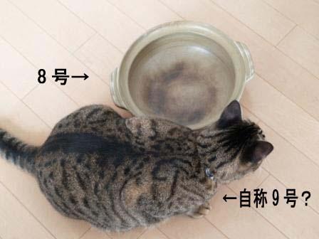 猫鍋4.jpg