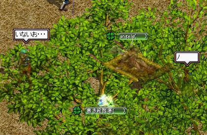 木と同化^^^.JPG