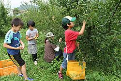 梅収穫体験.jpg