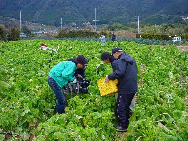 菜の花収穫 取材風景s-.jpg