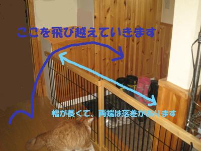 猫の脱走は市販のゲートじゃ防げない