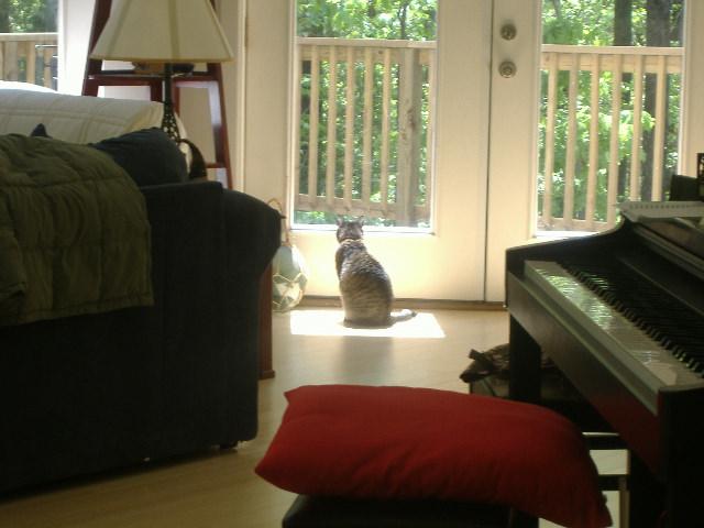 陽だまりのネコ様