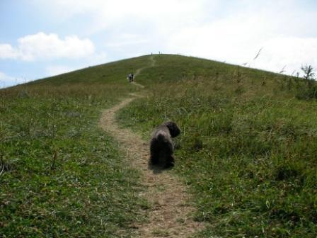 180812山登りするチョビ