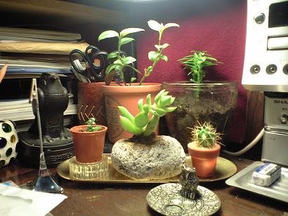 my plantetion.JPG