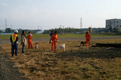 救助犬ネットワーク
