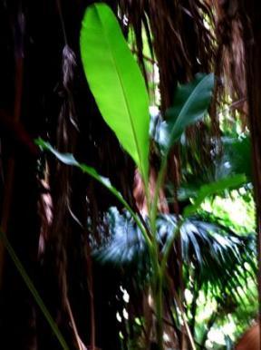 070亜熱帯植物08307