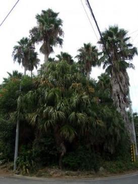 071亜熱帯植物園外景08306