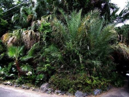 07亜熱帯植物園前景