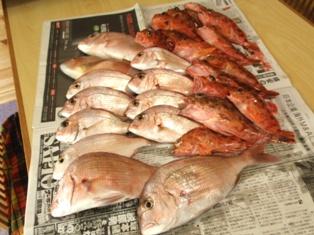 鯛・カサゴ