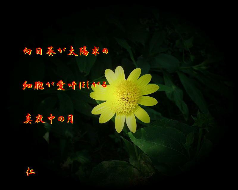 向日葵が太陽求め細胞が愛呼ほしがる真夜中の月