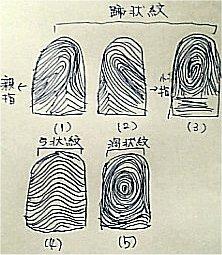指紋からわかる自分の性格 | 手...
