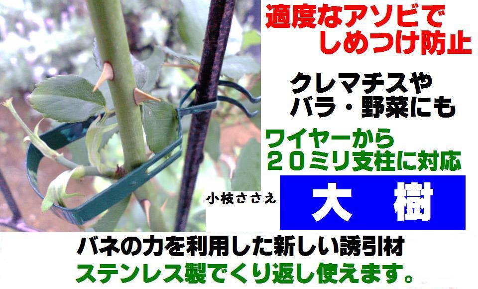 大樹ポップミニ.JPG