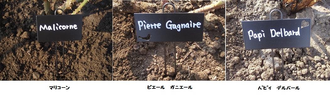 プランツネーム