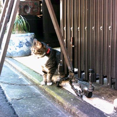 猫と、、、.jpg