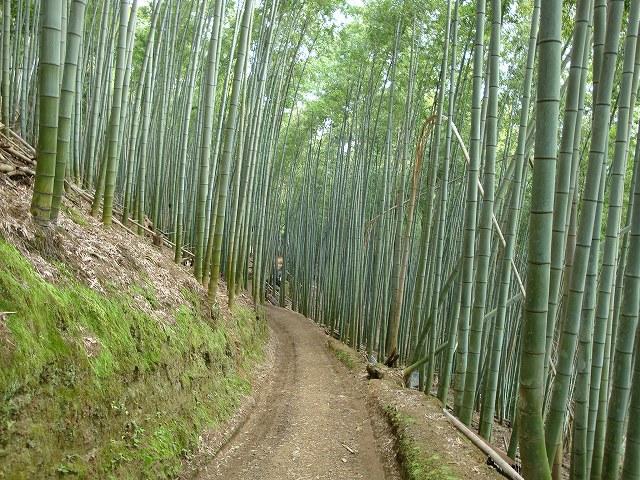 京都一周トレイル西山09