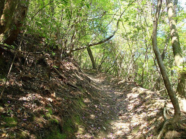 天王山ハイキングコース01