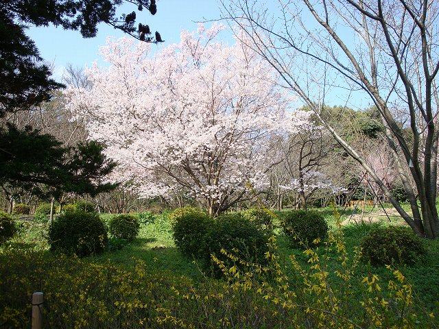 京都府立植物園01