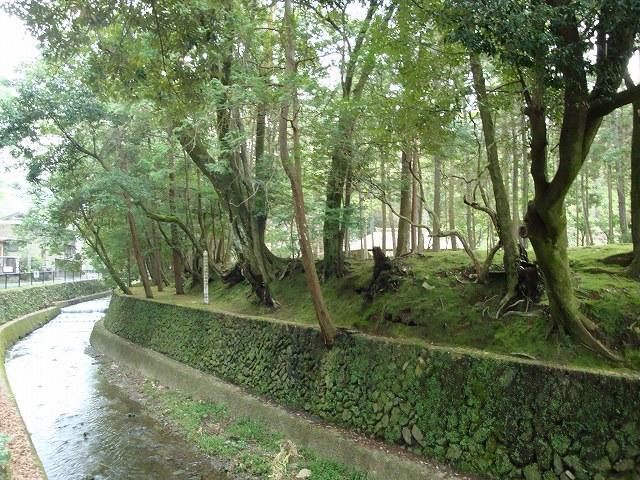 京都一周トレイル西山02