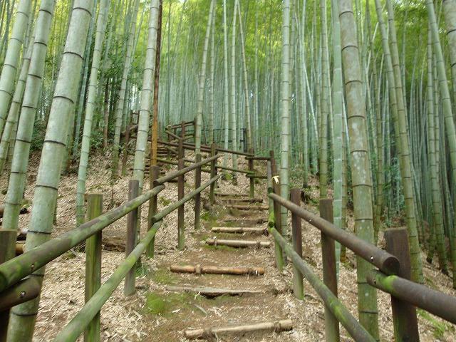京都一周トレイル西山04