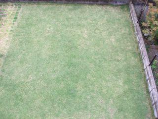 芝生101114