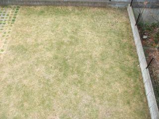 芝生100103