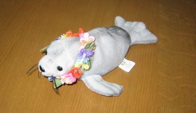 ハワイアンモンクシール