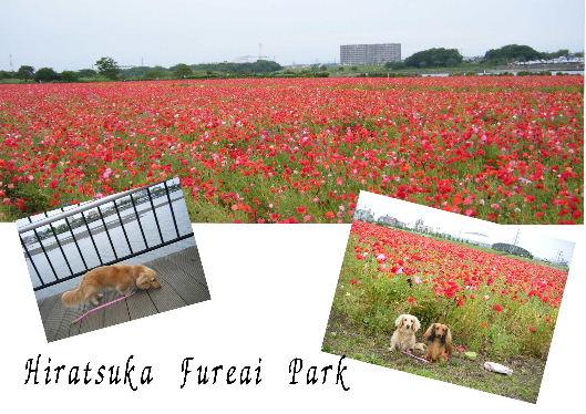 平塚ふれあい公園.jpg