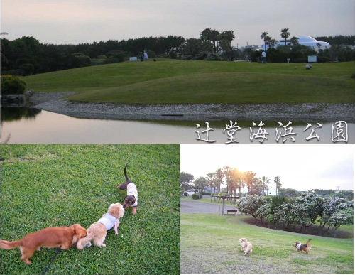"""辻堂海浜公園.JPG"""""""