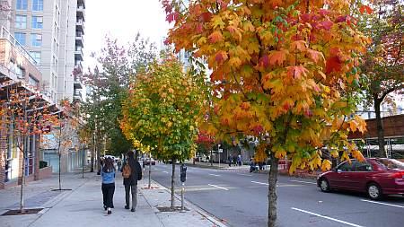 通りの紅葉