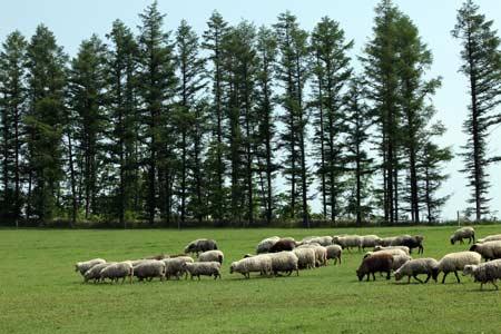 石田めん羊牧場