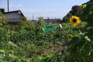 44_畑 2009-09-06 0-36-56.jpg